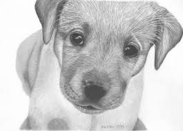 drawing of puppy