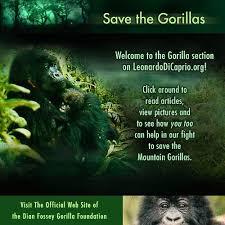 save the gorillas