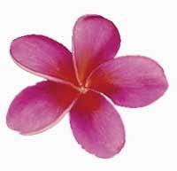 free hawaii clipart