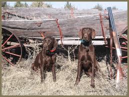 hunt dogs