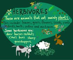herbivores food chain