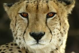 african animals photos