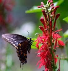 perennials flower