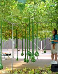 hydroponic planting