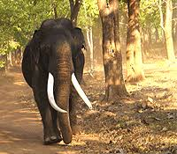 kerala elephant photos