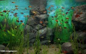 rainbow fish tank