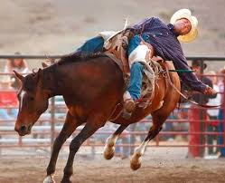 bull rodeos