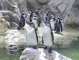 penguins zoo