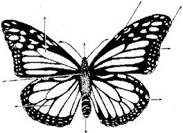 fotos de mariposas monarcas