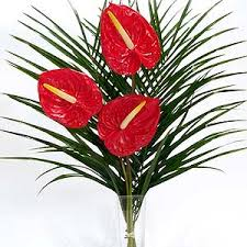 anthuriums flower