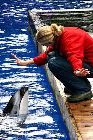 marine biologist dolphins