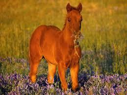 filly horses