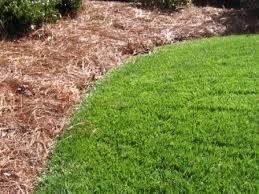 landscaping edge