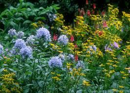 gardens plant
