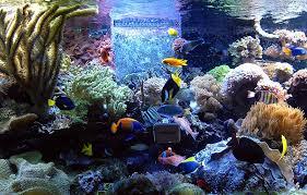 aquarium coral reef