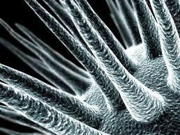 microscopic photos