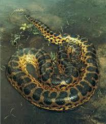 heaviest snake