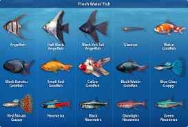 fish in fresh water