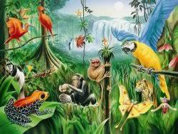 tropical rainforest wallpaper