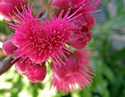 names of hawaiian flowers