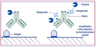 biotin avidin system