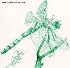 drawings of dragon flies