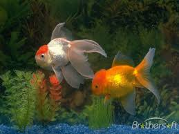 free fish pictures