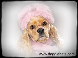 hat for dog