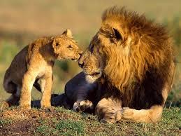lions wild