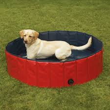 dogs swimming in pools