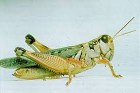 grassland insects