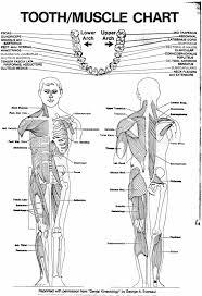 muscle chart back