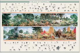 mammals poster
