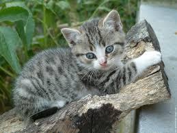 Galerie d'avatars et signatures pour les nouveaux ! Galerie-membre,chat-chaton,chaton1