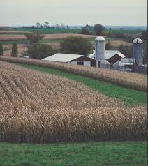 corn agriculture