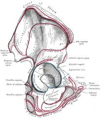 anatomy of hip bone