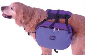 dogs backpacks
