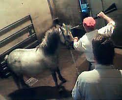 horse abattoir