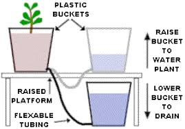 cannabis hydroponics