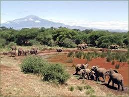 safari adventure holidays