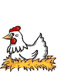 animated chicken pics