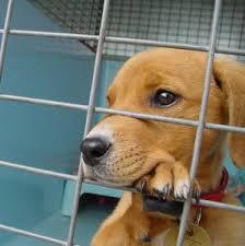animal up for adoption