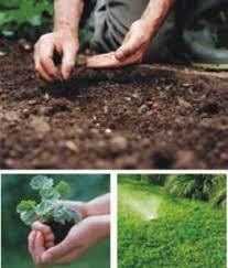 fotos de jardineria
