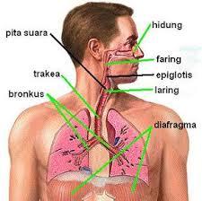 gambar sistem pernafasan