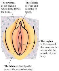 girls body part