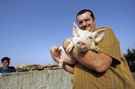 farm pig pictures