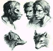 navajo wolf