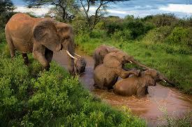 national geographic safari