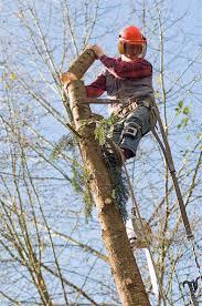 logger safety