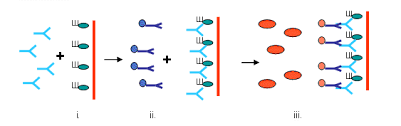 antibody elisa